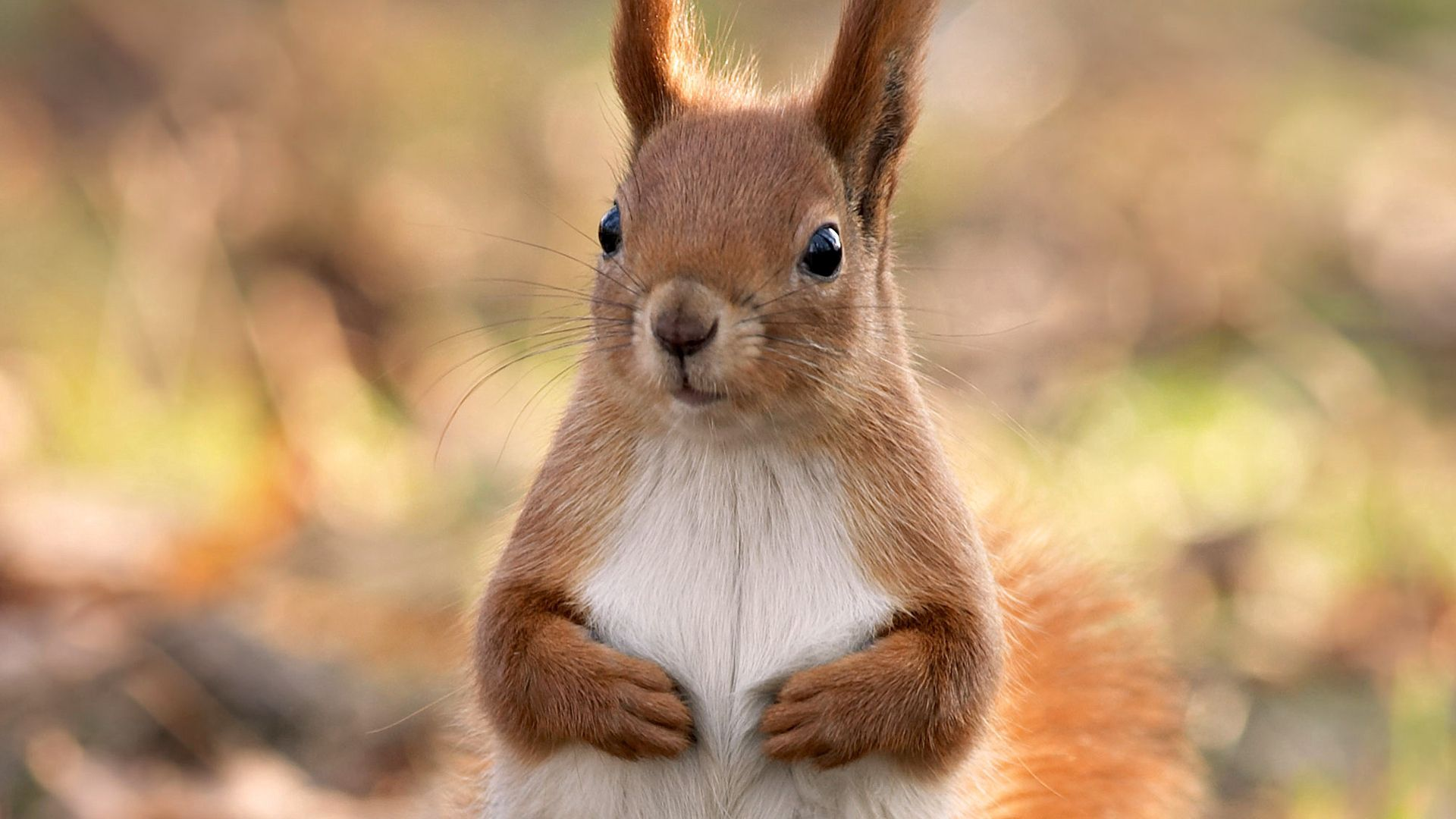 157904 Screensavers and Wallpapers Squirrel for phone. Download Animals, Squirrel, Muzzle, Sight, Opinion, Paws pictures for free