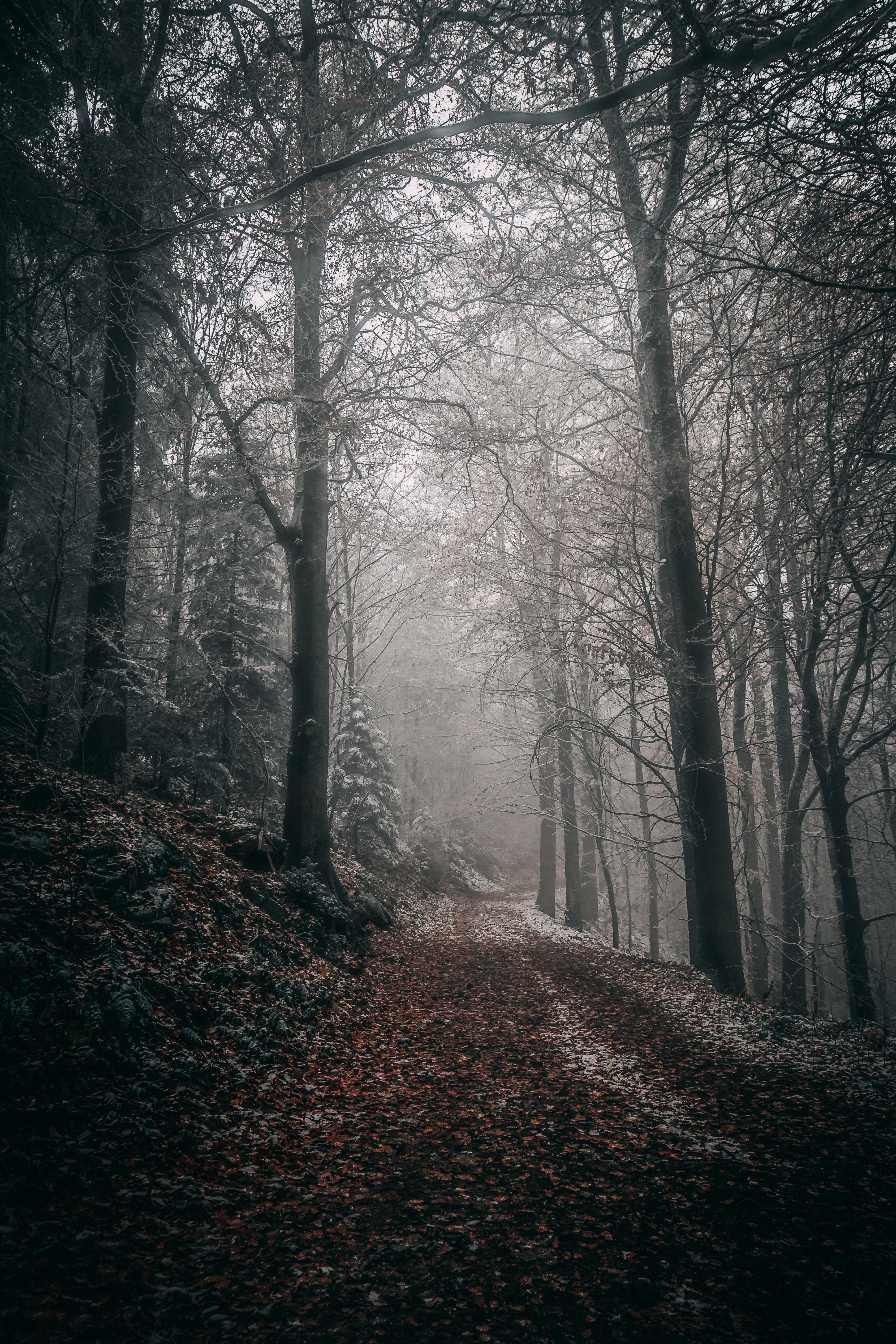 58168 download wallpaper Nature, Trees, Autumn, Forest, Fog, Path, Foliage screensavers and pictures for free