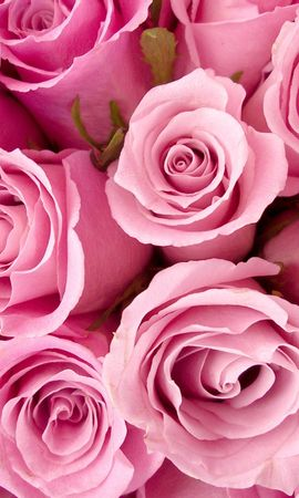 20759 baixar papel de parede Plantas, Flores, Rosas - protetores de tela e imagens gratuitamente