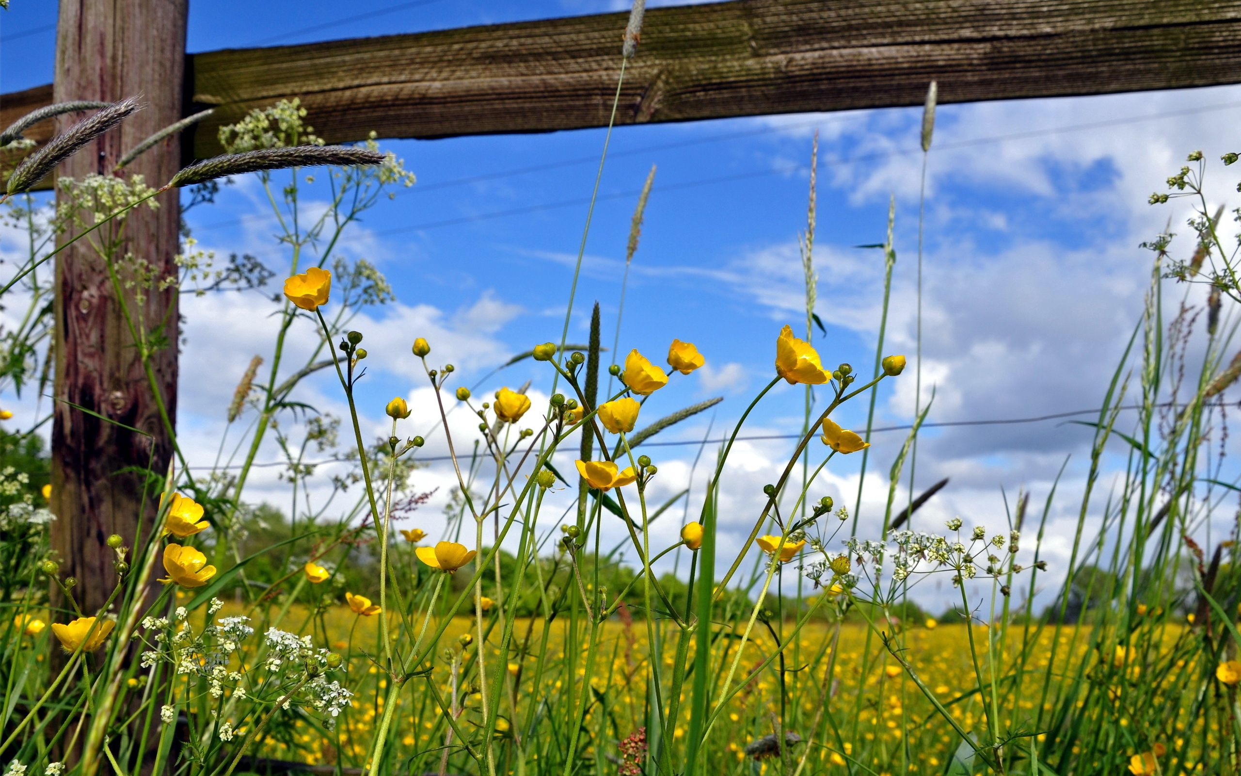 130758 download wallpaper Nature, Fence, Field, Fencing, Enclosure, Planks, Board, Sunny, Flowers screensavers and pictures for free