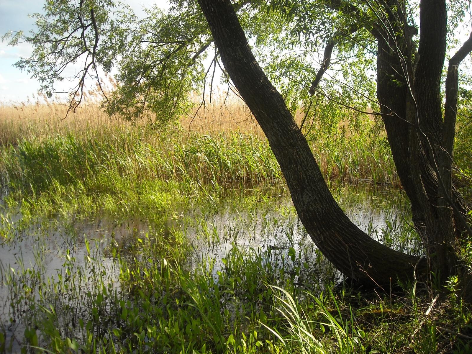 7145 скачать обои Растения, Пейзаж, Деревья, Трава - заставки и картинки бесплатно
