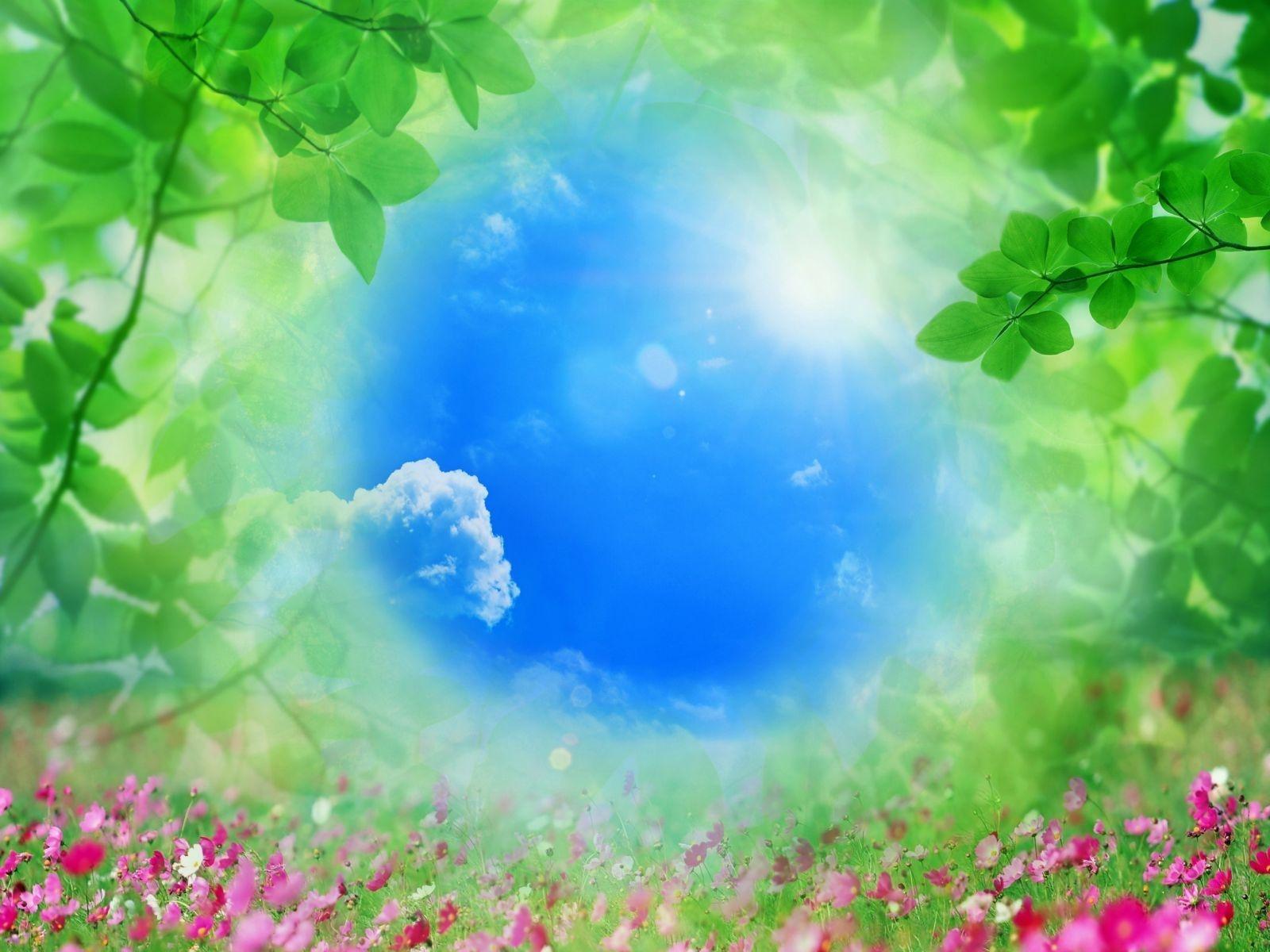 2715 Bildschirmschoner und Hintergrundbilder Pflanzen auf Ihrem Telefon. Laden Sie Pflanzen, Landschaft, Sky, Sun, Bilder Bilder kostenlos herunter
