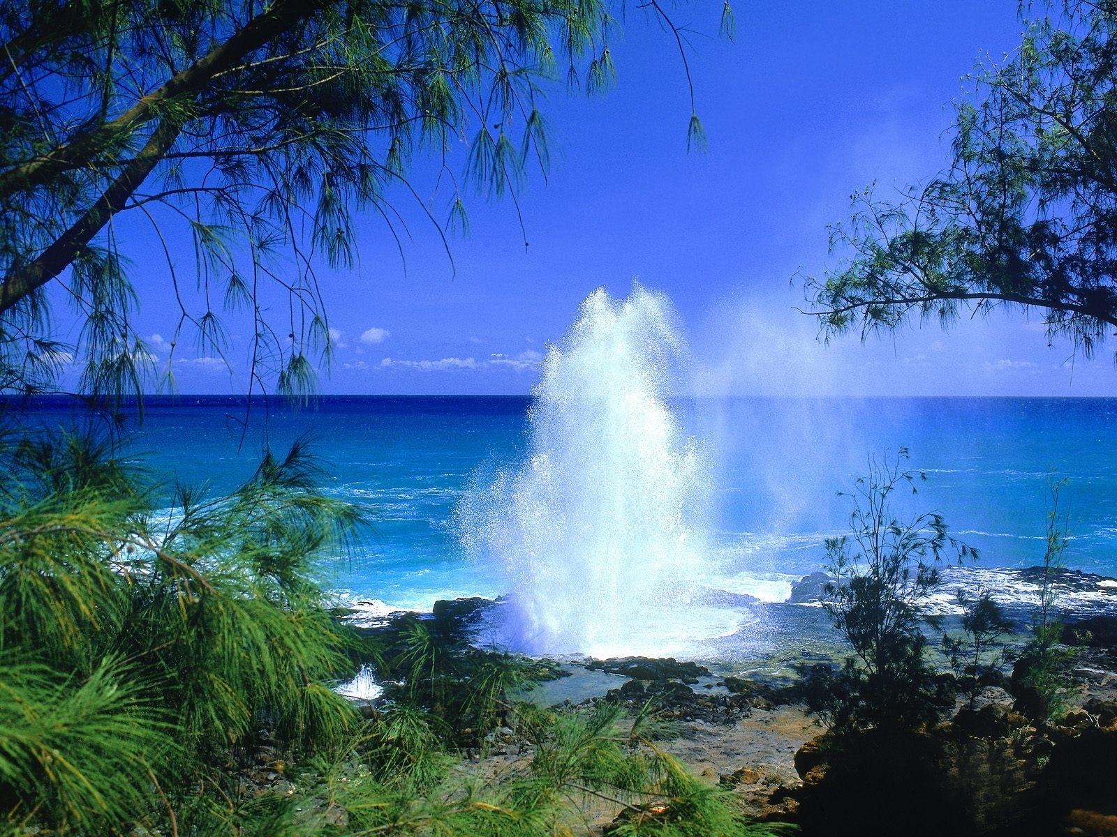 4259 скачать обои Пейзаж, Вода, Деревья, Море - заставки и картинки бесплатно