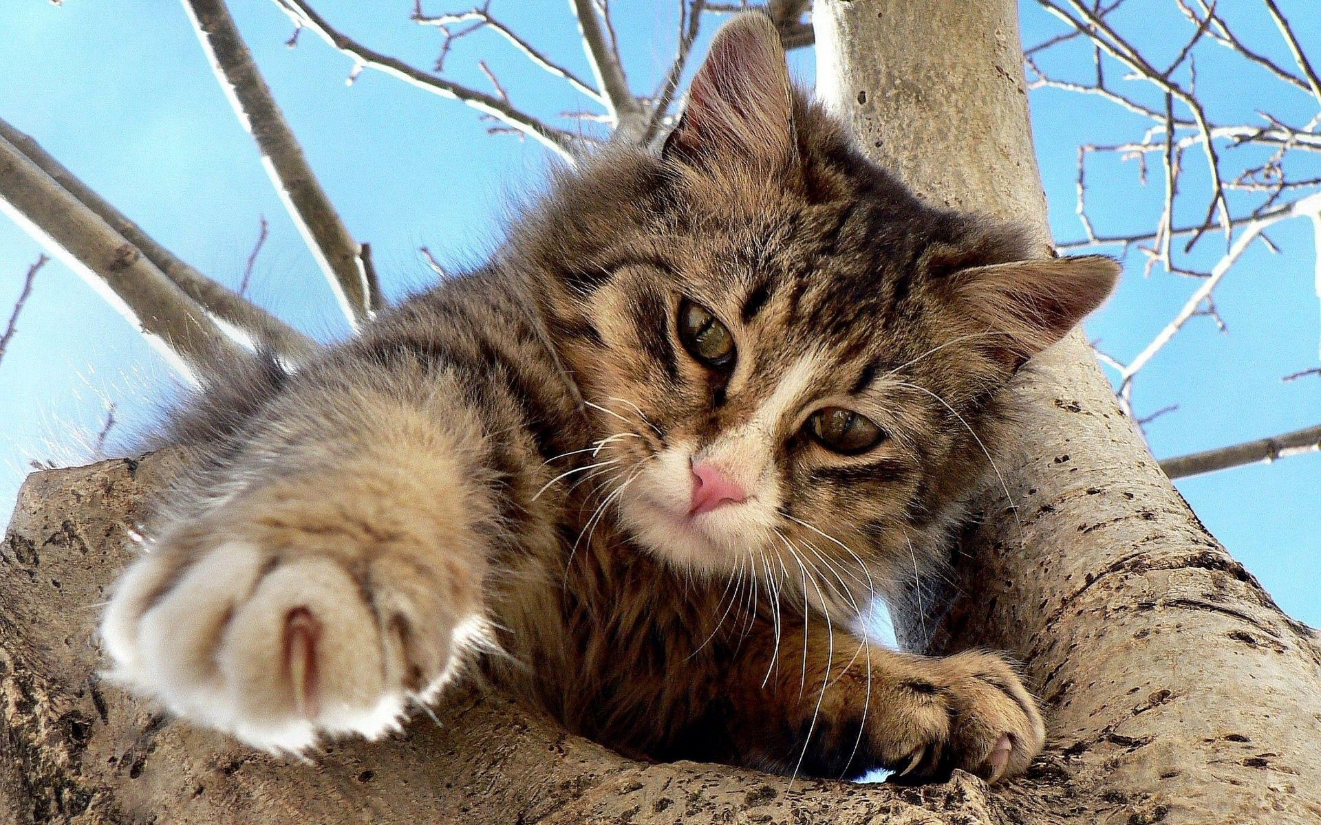 144823 download wallpaper Animals, Cat, Wood, Tree, Crawl, Climb, Playful screensavers and pictures for free