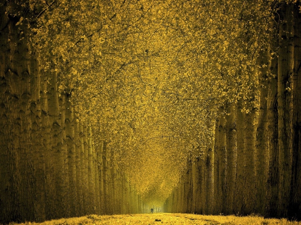 28031 download wallpaper Landscape, Trees, Autumn screensavers and pictures for free