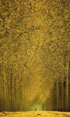 28031 скачать обои Пейзаж, Деревья, Осень - заставки и картинки бесплатно