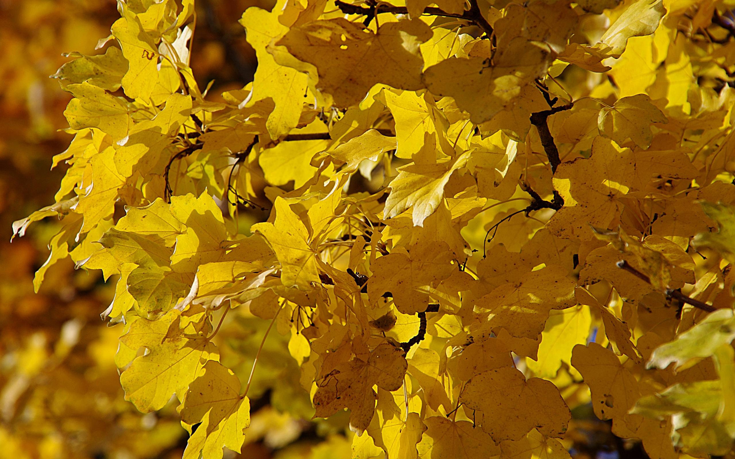 32932 скачать обои Растения, Осень, Листья - заставки и картинки бесплатно