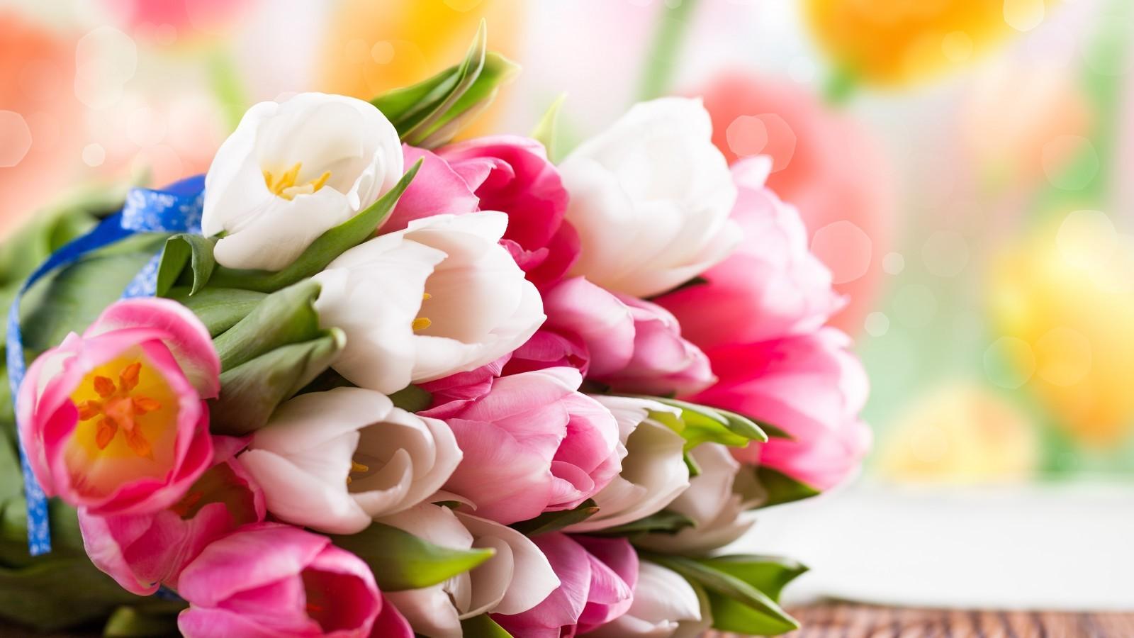 17426 скачать обои Растения, Цветы, Тюльпаны - заставки и картинки бесплатно