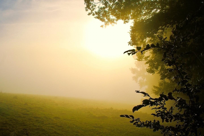 29414 скачать обои Пейзаж, Деревья, Поля - заставки и картинки бесплатно