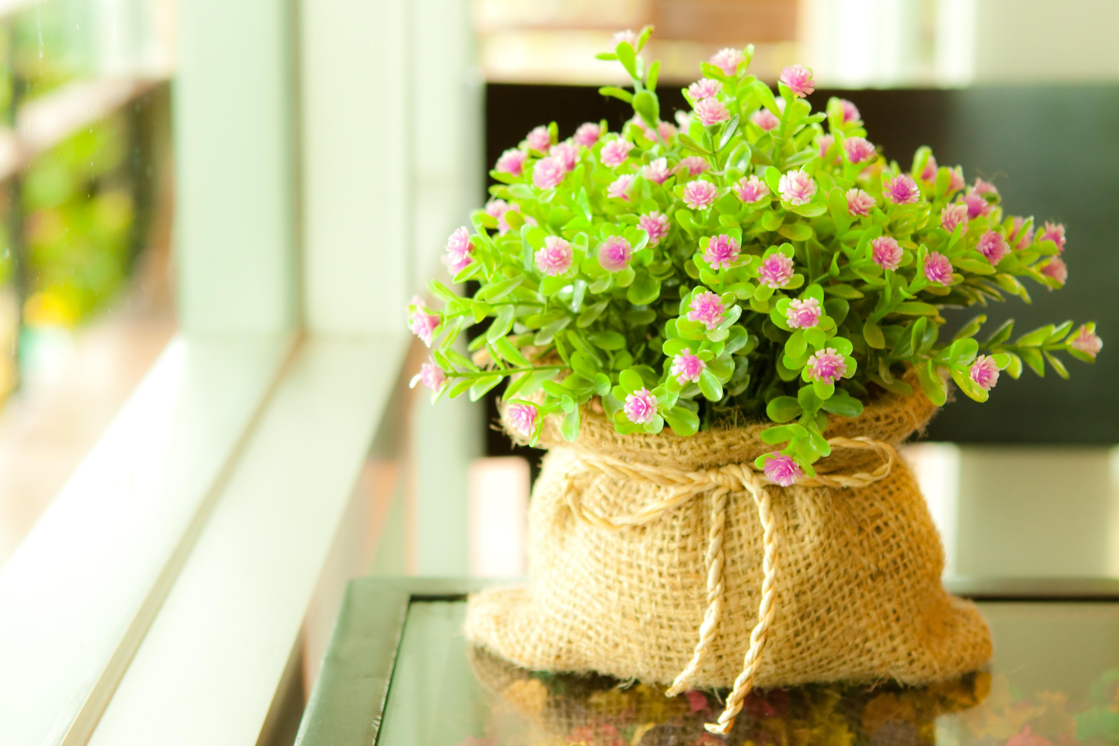 15969 descargar fondo de pantalla Plantas, Flores: protectores de pantalla e imágenes gratis