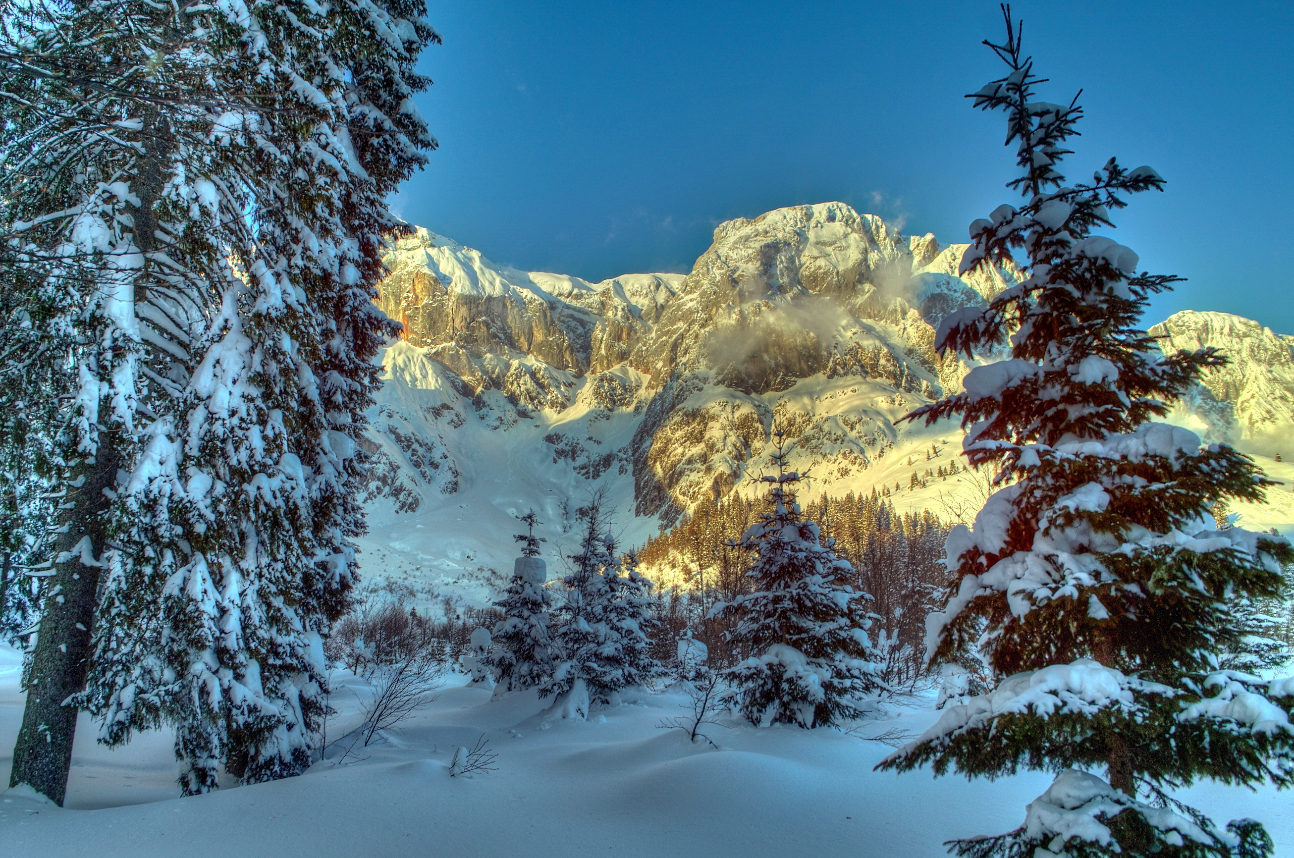 93361 Screensavers and Wallpapers Spruce for phone. Download Winter, Nature, Trees, Mountains, Snow, Austria, Alps, Spruce, Fir pictures for free