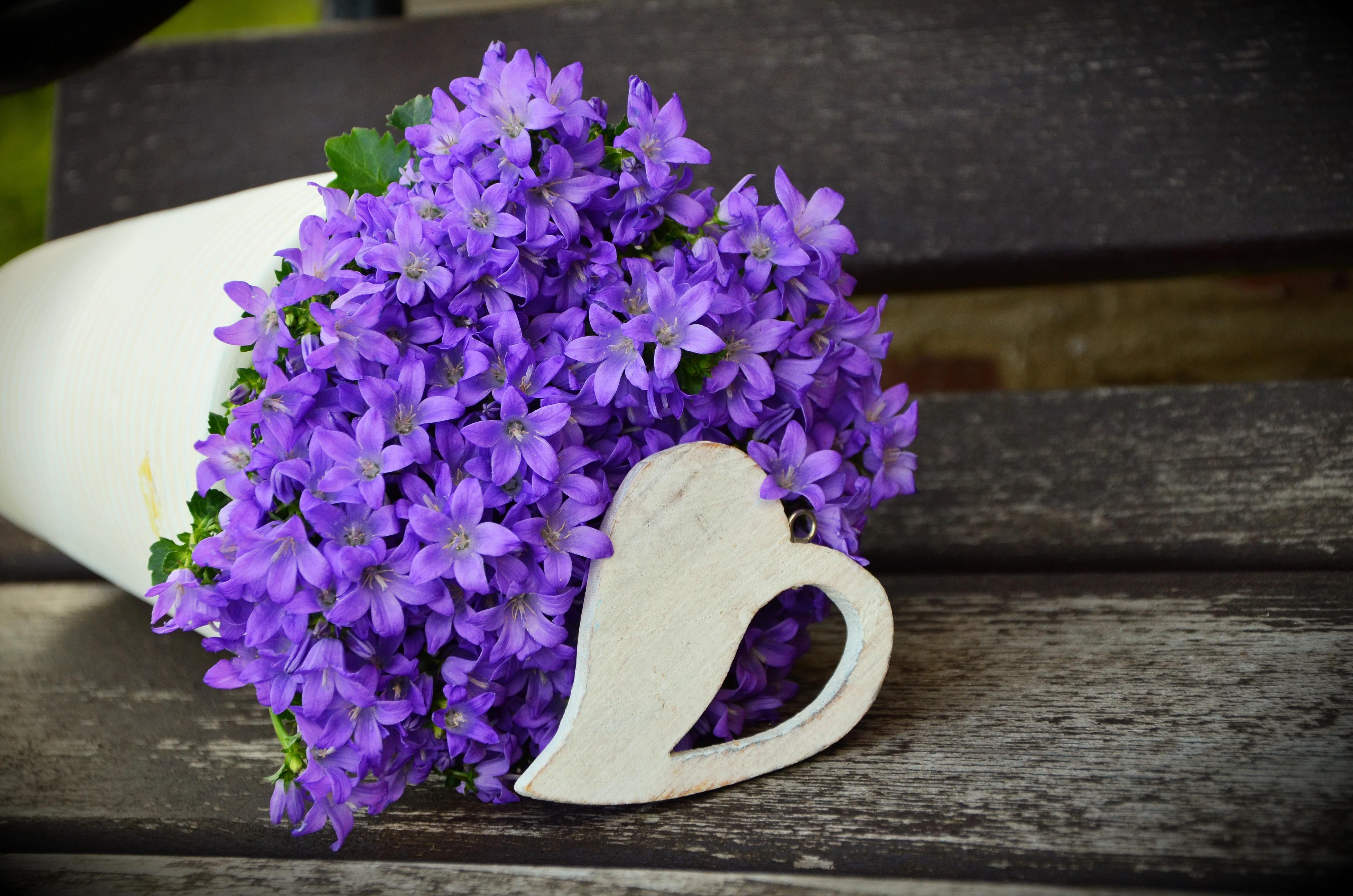 73316 descargar fondo de pantalla Púrpura, Violeta, Flores, Ramo: protectores de pantalla e imágenes gratis