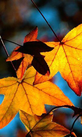 11848 скачать обои Растения, Осень, Листья - заставки и картинки бесплатно