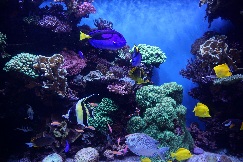 152119 Заставки и Обои Рыбы на телефон. Скачать Рыбы, Аквариум, Животные, Водоросли, Риф картинки бесплатно