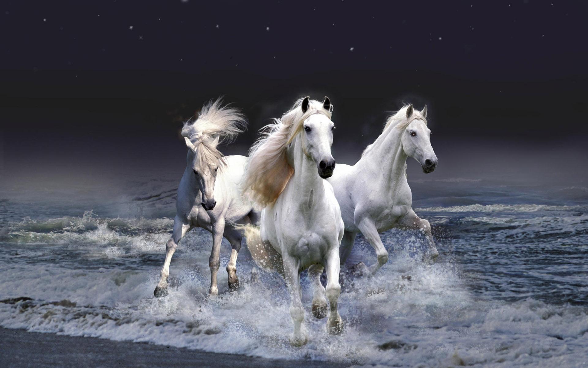 47285 Заставки и Обои Лошади на телефон. Скачать Лошади, Животные картинки бесплатно