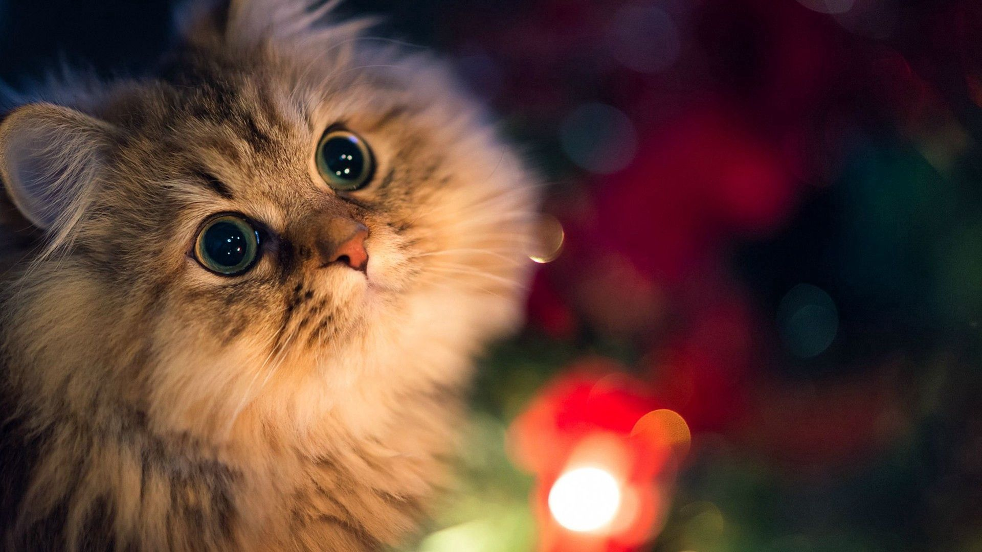 147233 Screensavers and Wallpapers Beautiful for phone. Download Animals, Cat, Fluffy, Muzzle, Dark Background, Beautiful pictures for free