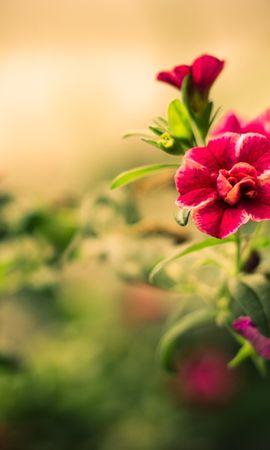 18605 скачать обои Растения, Цветы - заставки и картинки бесплатно