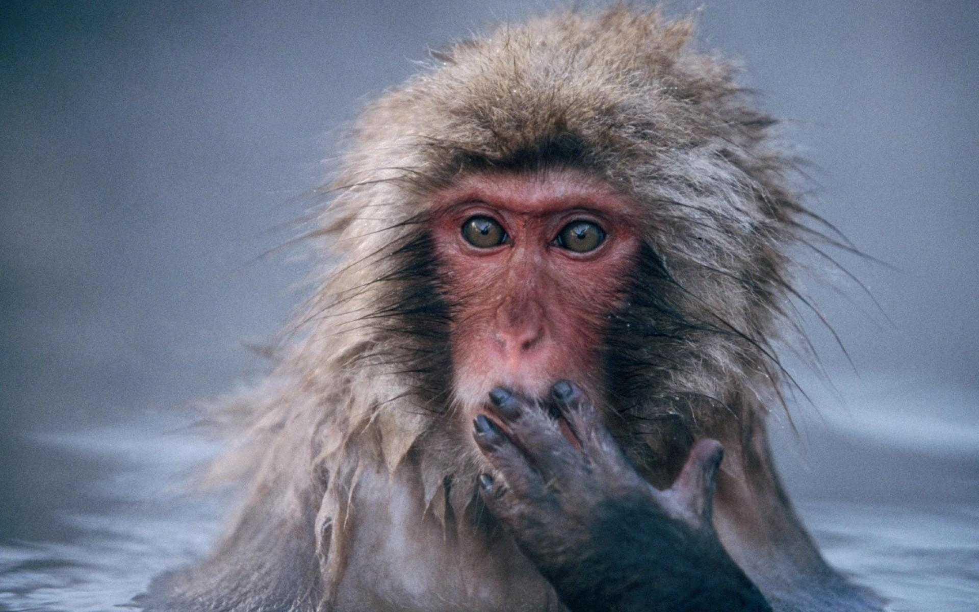 39586 Screensavers and Wallpapers Monkeys for phone. Download Animals, Monkeys pictures for free