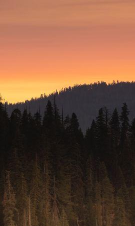 157025 скачать обои Природа, Лес, Деревья, Закат, Сумерки, Пейзаж - заставки и картинки бесплатно