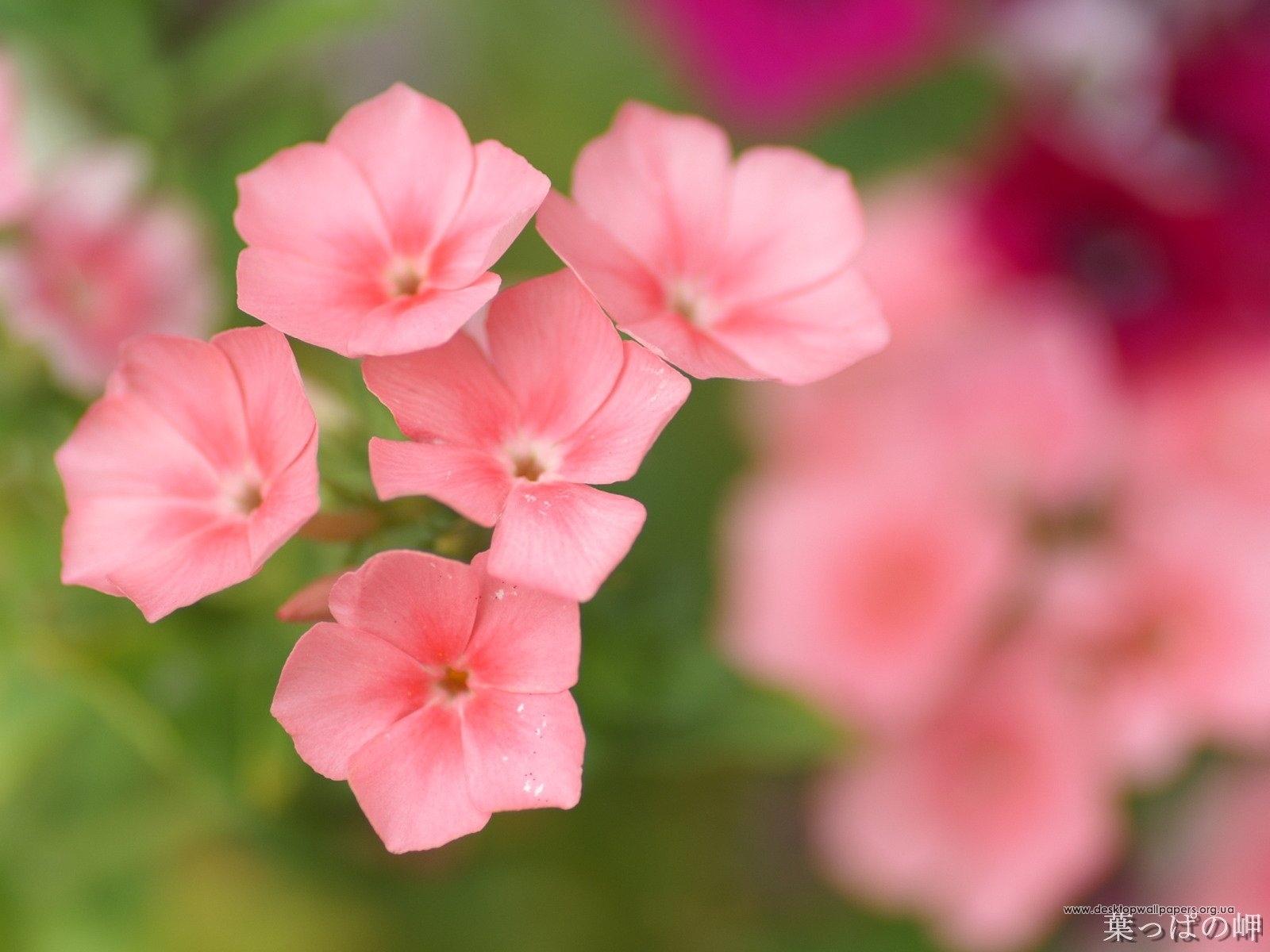 6679 скачать обои Растения, Цветы - заставки и картинки бесплатно
