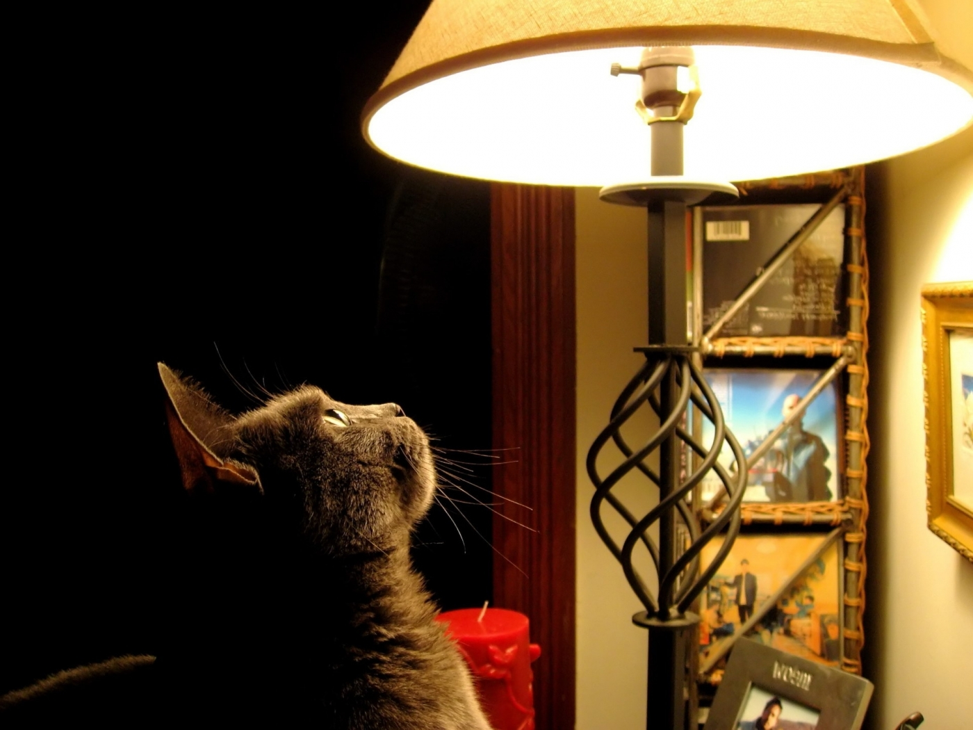 43969 скачать обои Животные, Кошки (Коты, Котики), Объекты - заставки и картинки бесплатно