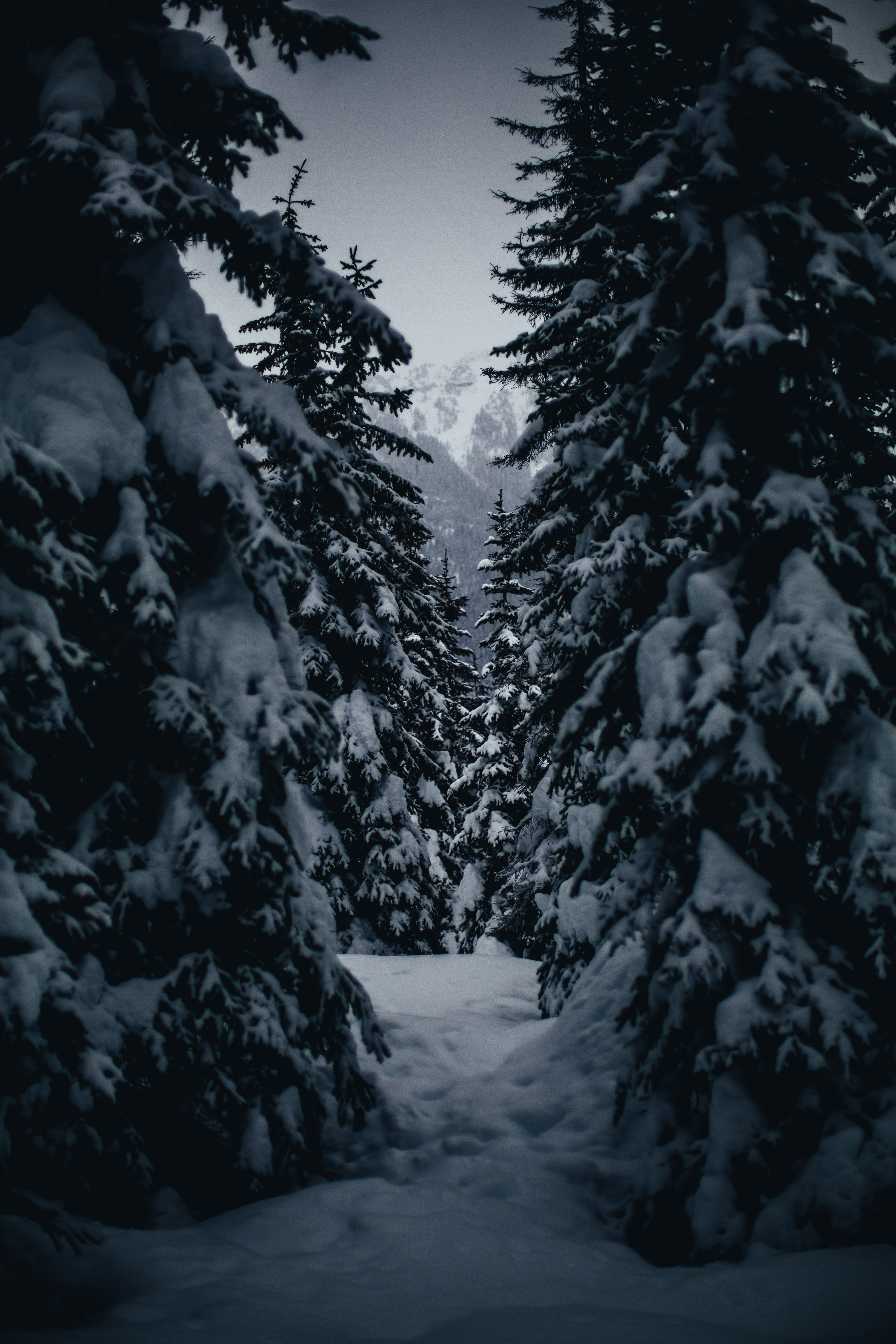 145868 download wallpaper Winter, Nature, Trees, Snow Covered, Snowbound, Passage screensavers and pictures for free