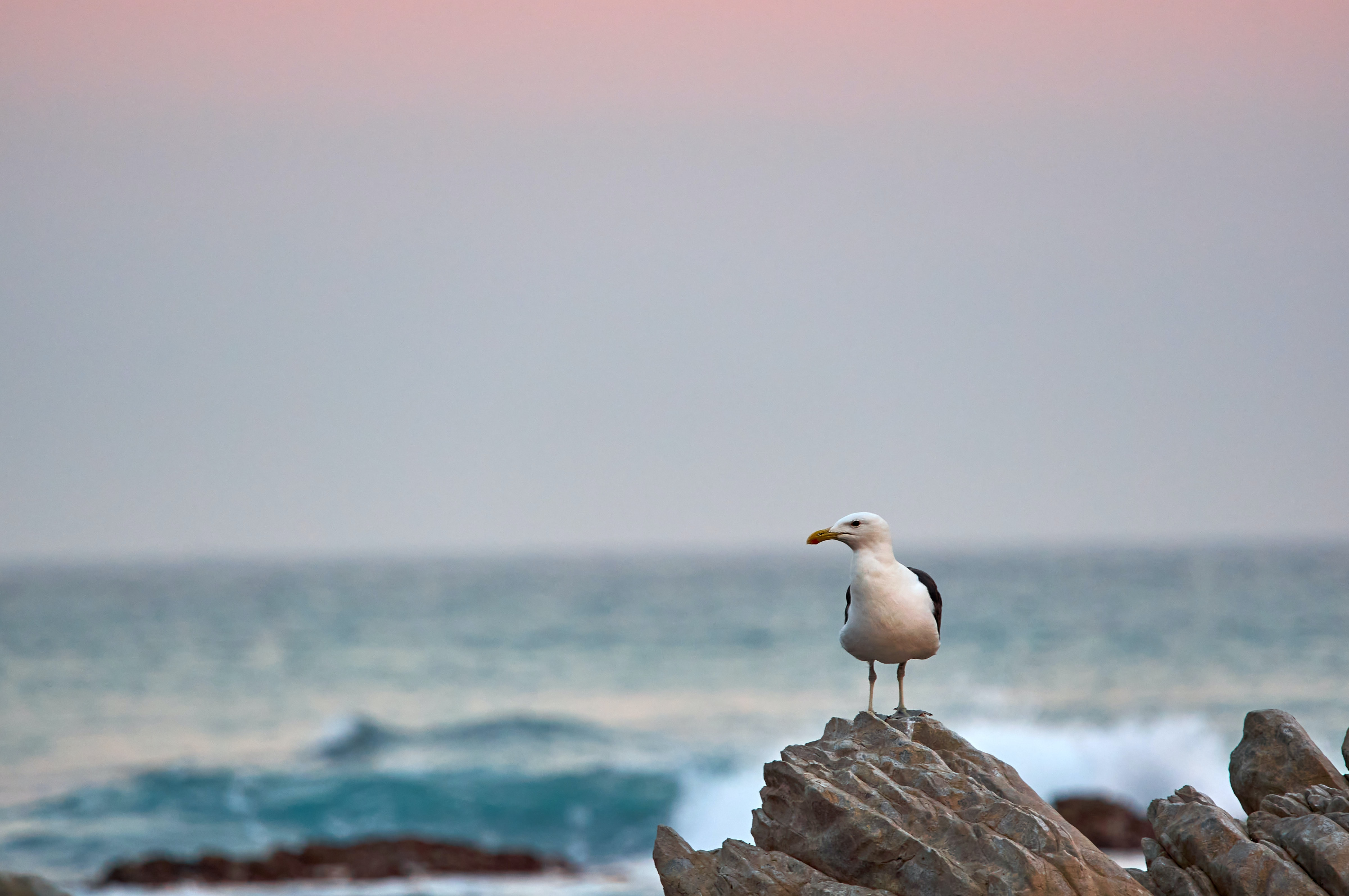 56225 download wallpaper Animals, Gull, Seagull, Bird, Beak, Rock, Stone, Sea screensavers and pictures for free