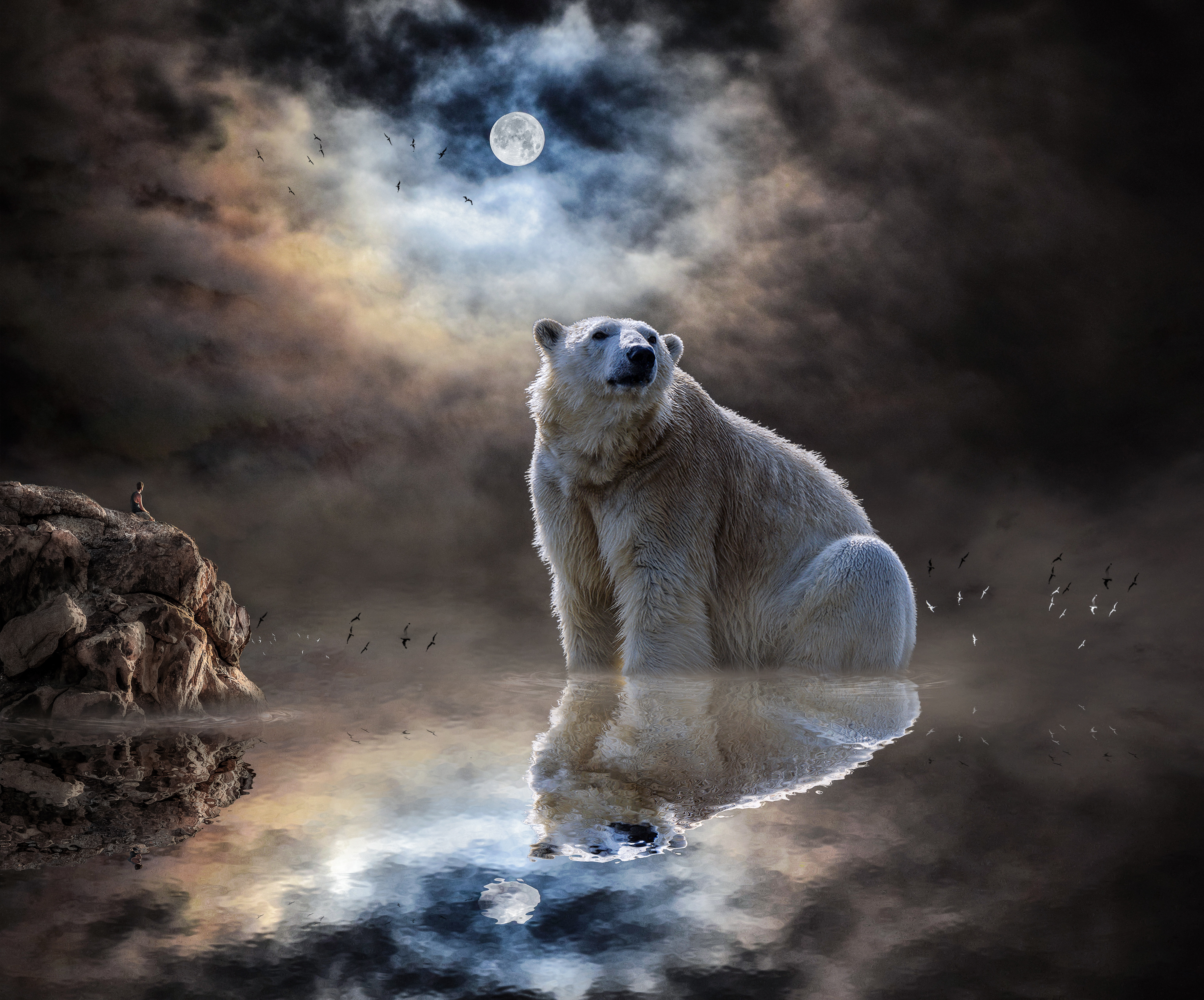 88371 download wallpaper Animals, Reflection, Ocean, Polar Bear, Mammal screensavers and pictures for free
