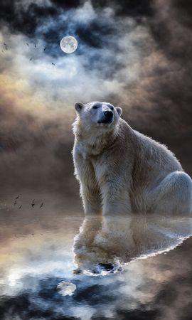 88371壁紙のダウンロード動物, ホッキョクグマ, 北極熊, 海洋, 大洋, 反射, 哺乳類, 哺乳動物-スクリーンセーバーと写真を無料で