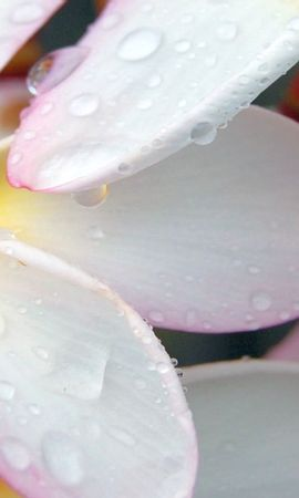 24746 скачать обои Растения, Цветы, Капли - заставки и картинки бесплатно