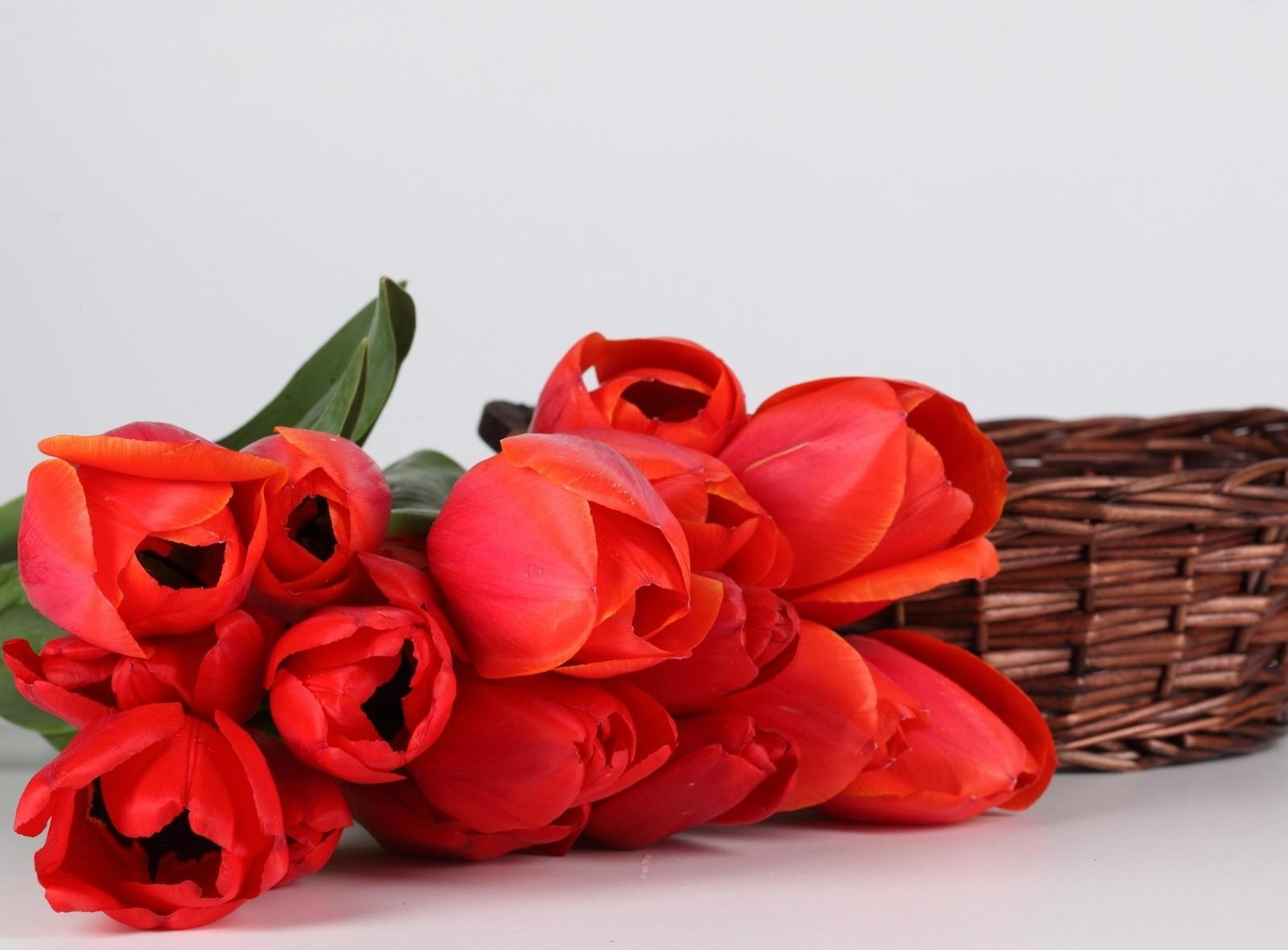 125075 скачать Красные обои на телефон бесплатно, Тюльпаны, Цветы, Лежать, Букет, Корзина Красные картинки и заставки на мобильный