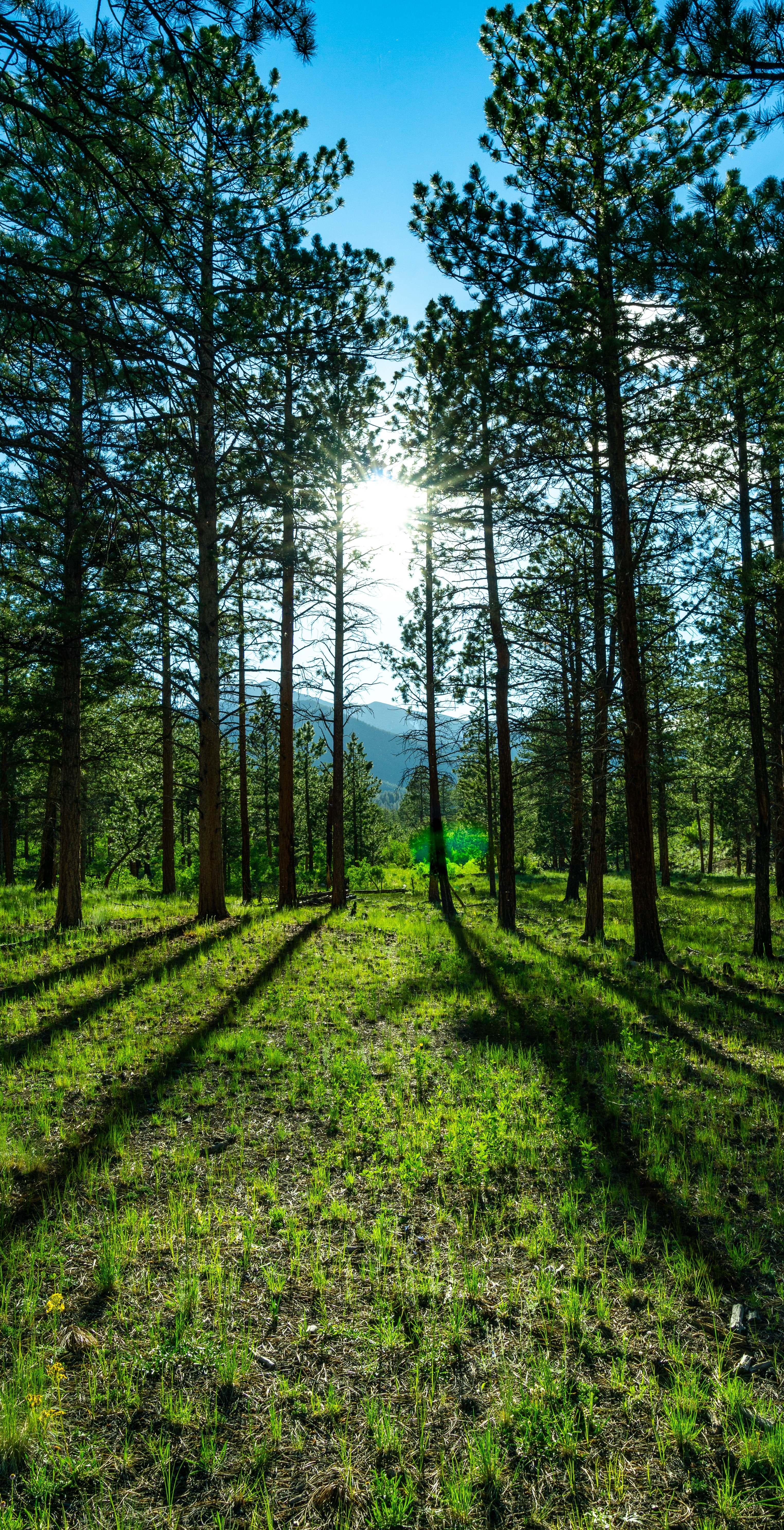 126952 download wallpaper Nature, Trees, Sunlight, Mountains, Landscape, Pine screensavers and pictures for free