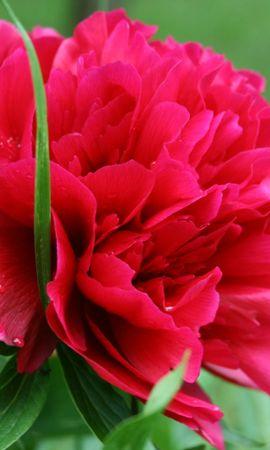 1738 descargar fondo de pantalla Plantas, Flores: protectores de pantalla e imágenes gratis