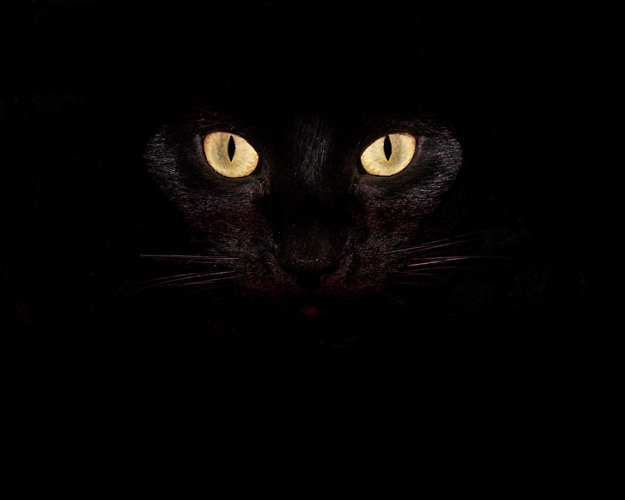 15727 download wallpaper Animals, Cats, Background screensavers and pictures for free