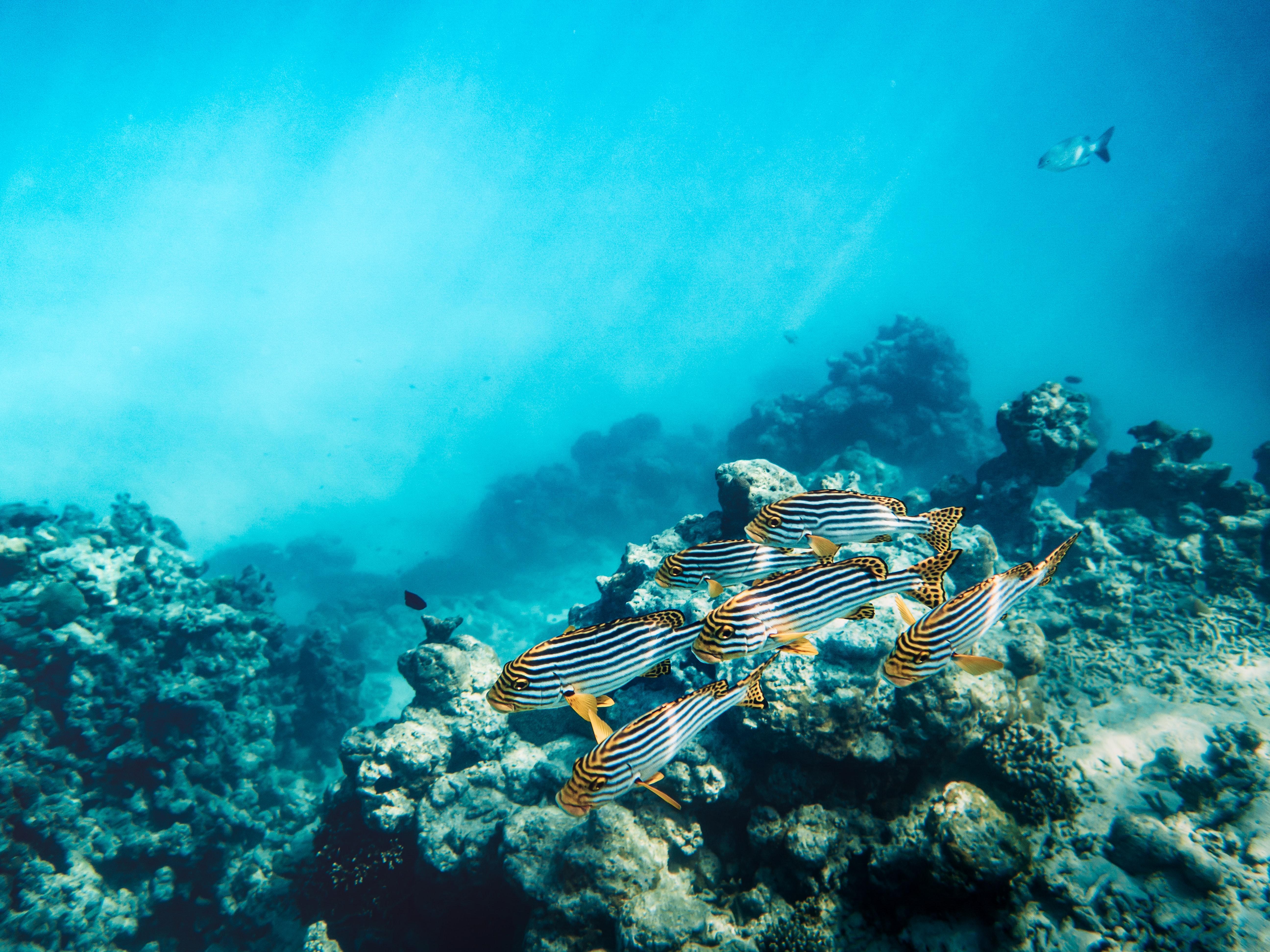 85265 Заставки и Обои Рыбы на телефон. Скачать Рыбы, Животные, Вода, Кораллы, Риф картинки бесплатно