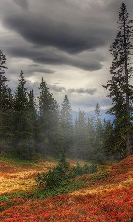 21960 скачать обои Пейзаж, Деревья, Облака - заставки и картинки бесплатно