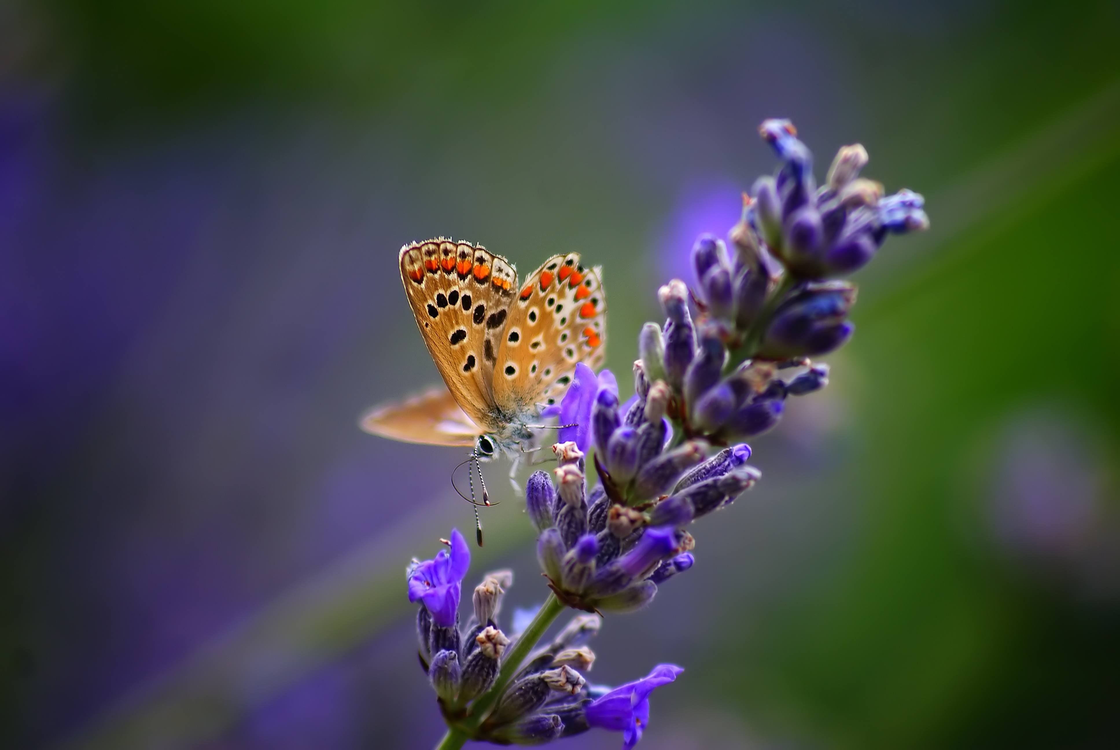 153428 download wallpaper Macro, Butterfly, Flower, Light Coloured, Light, Background screensavers and pictures for free