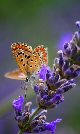 153428 télécharger le fond d'écran Macro, Papillon, Fleur, Couleur Claire, Lumière, Contexte - économiseurs d'écran et images gratuitement