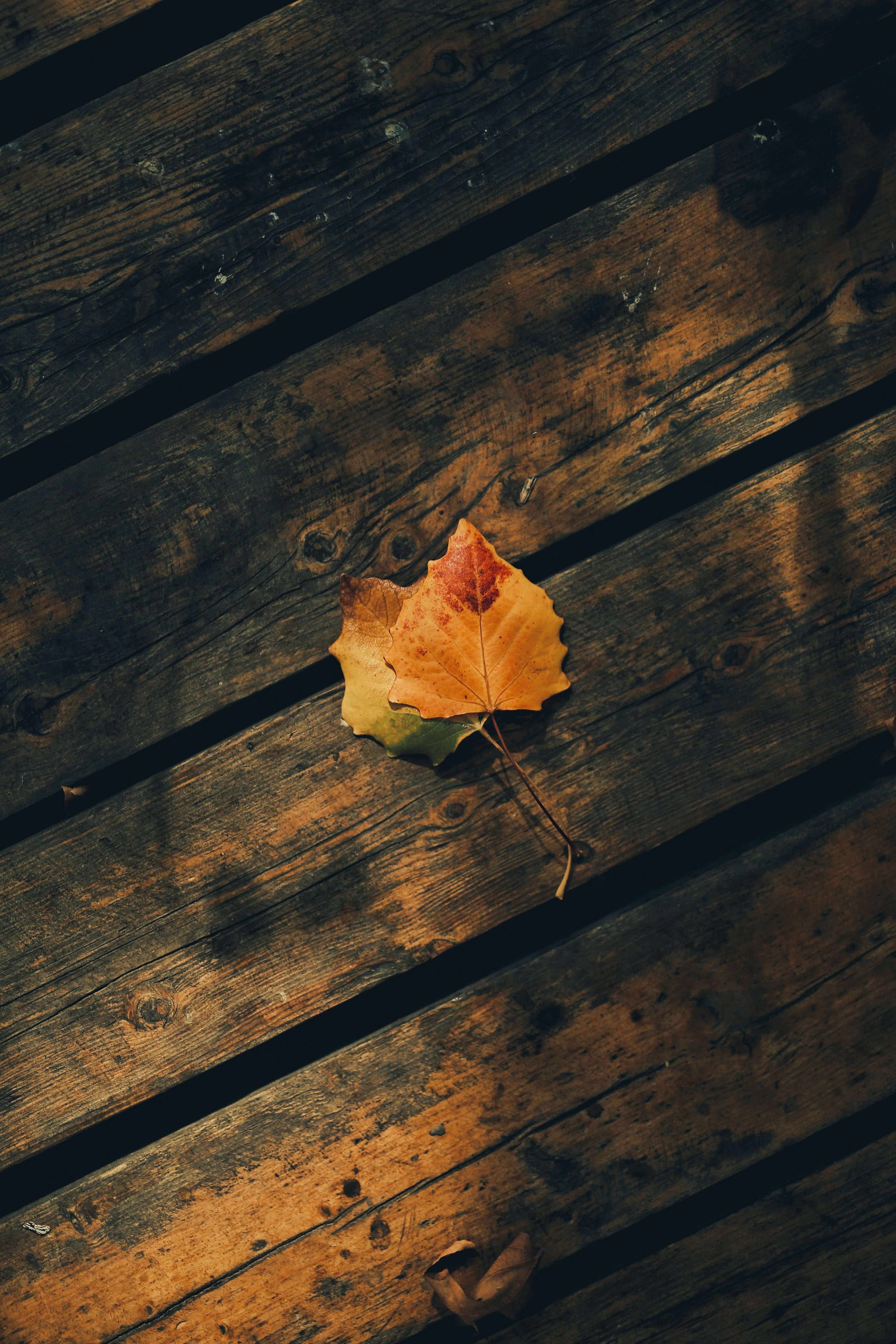 125026 download wallpaper Miscellanea, Miscellaneous, Leaves, Autumn, Wood, Wooden, Planks, Board screensavers and pictures for free