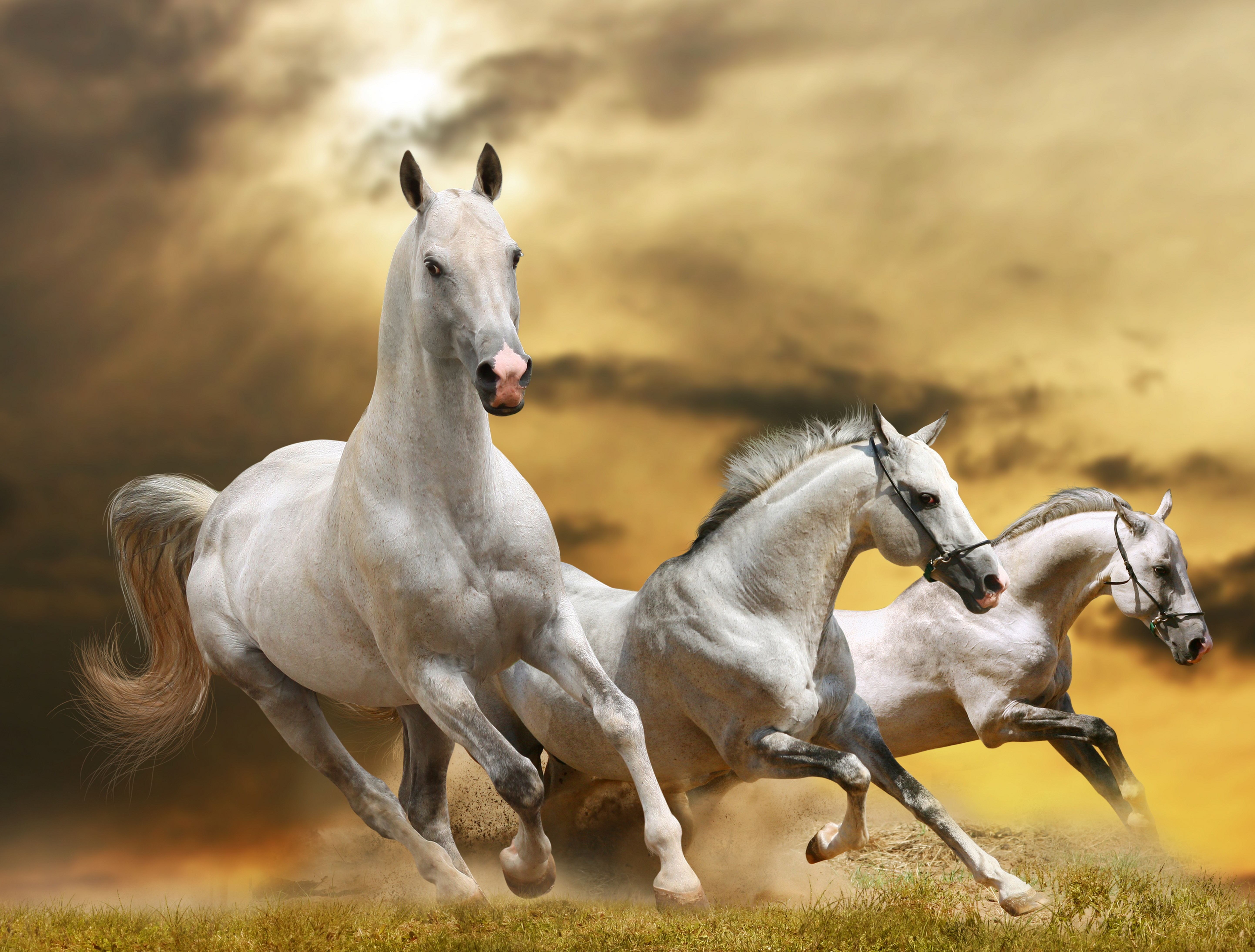 86465 download wallpaper Horses, Animals, Grass, Sky, Dust, Freedom, Run, Running screensavers and pictures for free