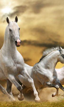 86465 baixar papel de parede Animais, Cavalos, Corre, Executando, Liberdade, Grama, Pó, Céu - protetores de tela e imagens gratuitamente