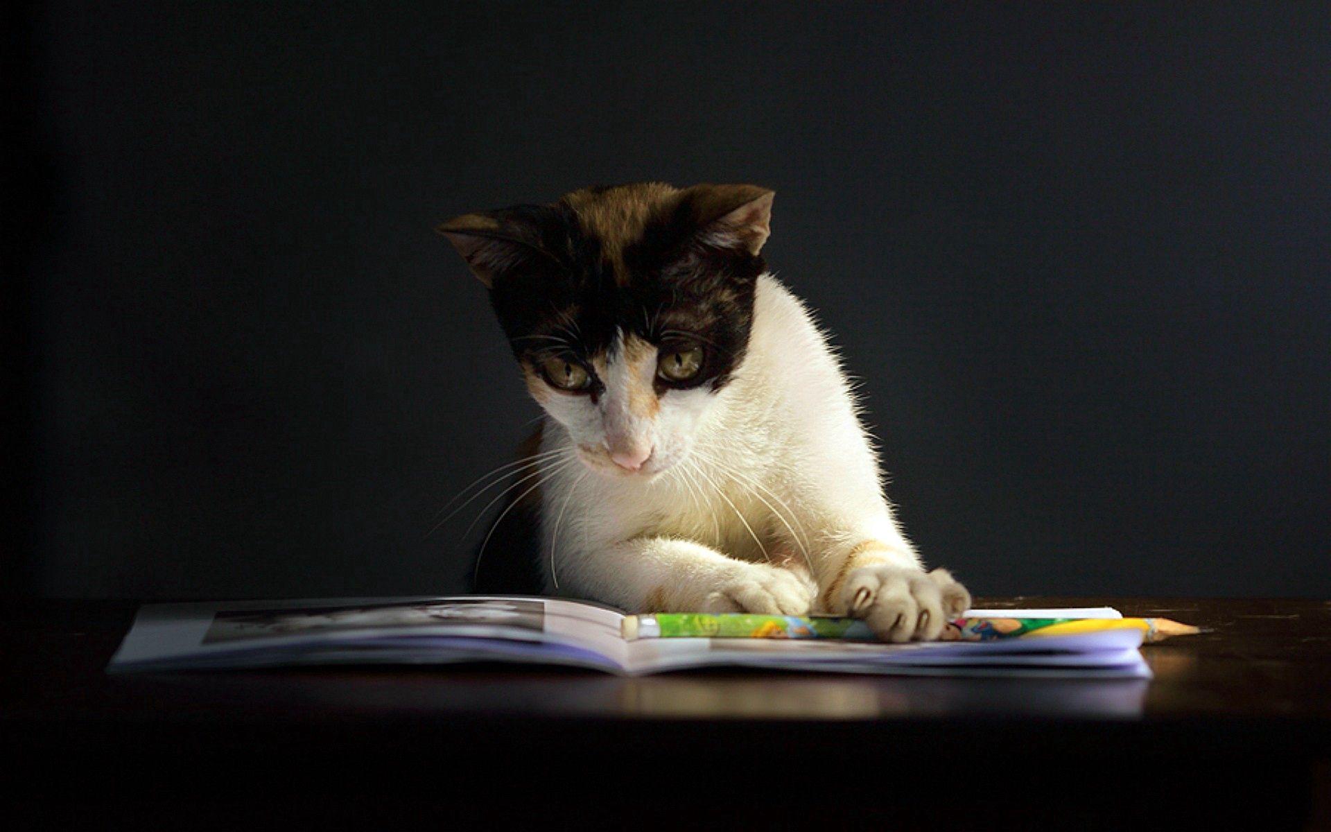 92430 скачать обои Животные, Кот, Тетрадь, Любопытство, Темный, Пятнистый - заставки и картинки бесплатно