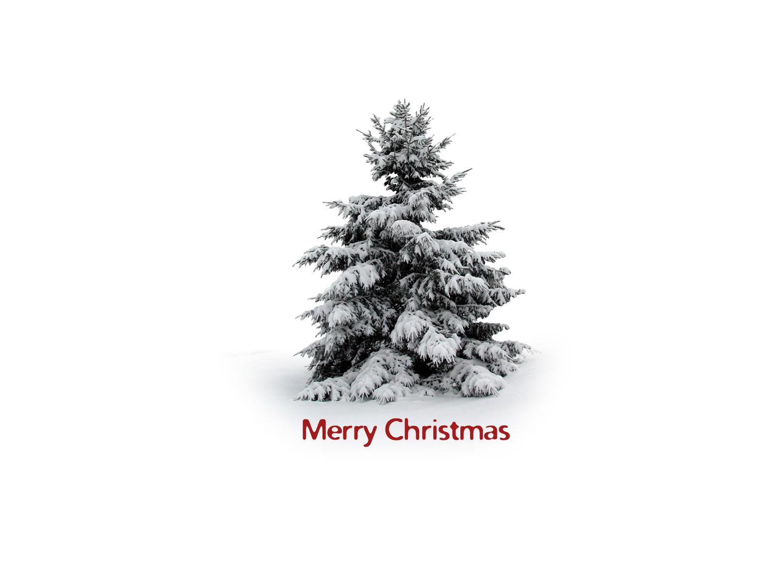13183 descargar fondo de pantalla Vacaciones, Invierno, Árboles, Año Nuevo, Nieve, Abetos, Navidad: protectores de pantalla e imágenes gratis