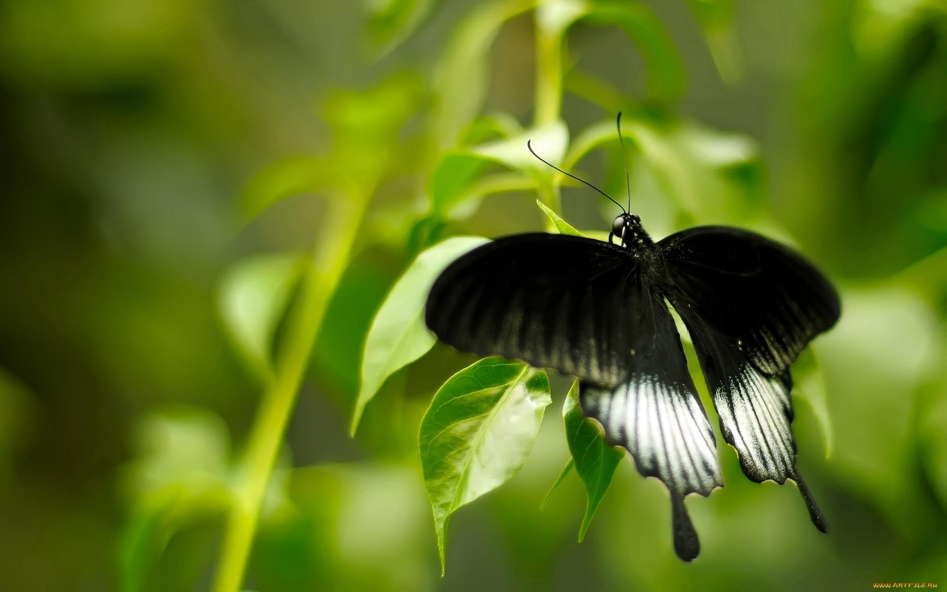 12378 скачать обои Бабочки, Насекомые - заставки и картинки бесплатно