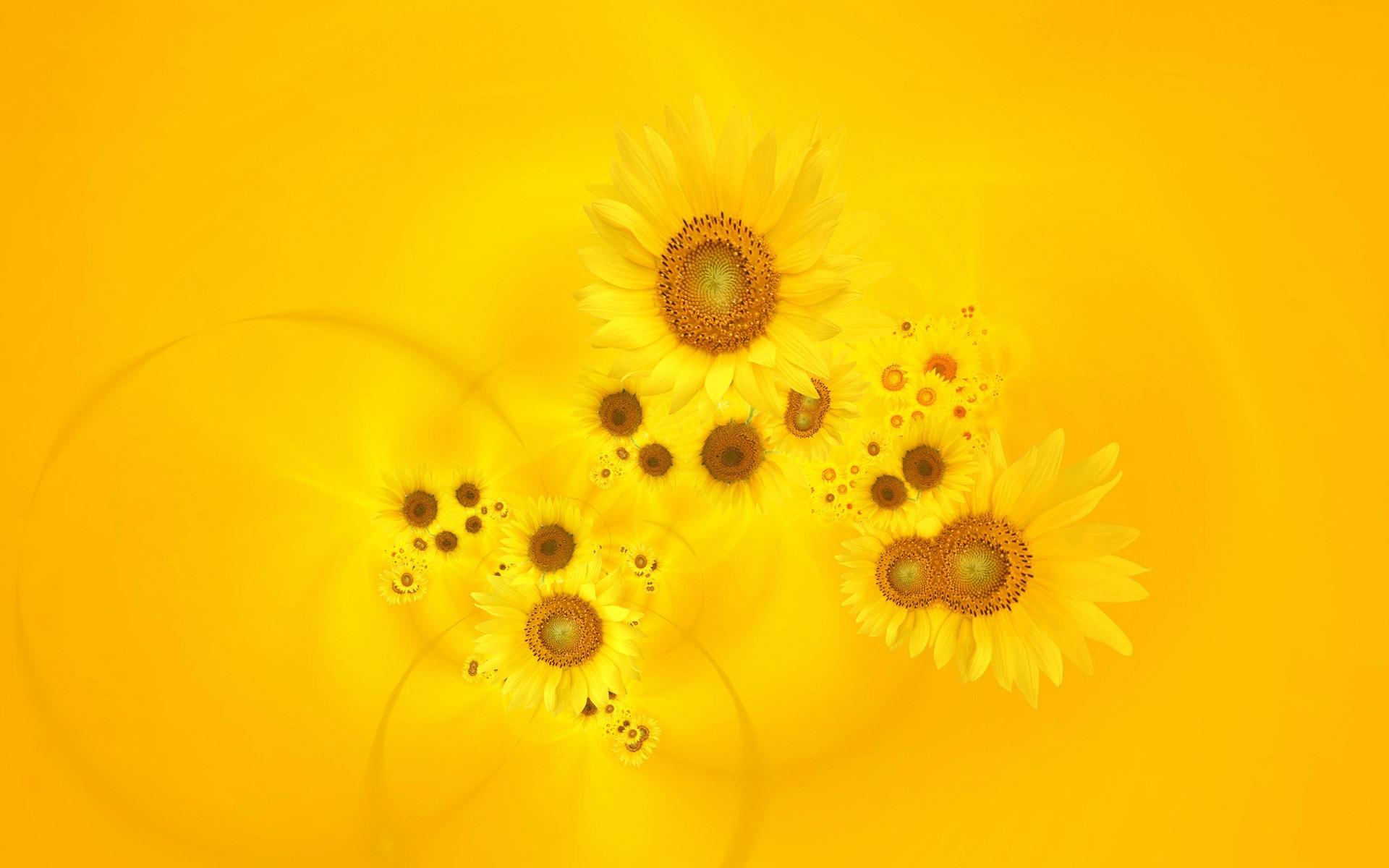 35027 descargar fondo de pantalla Flores, Fondo, Girasoles: protectores de pantalla e imágenes gratis