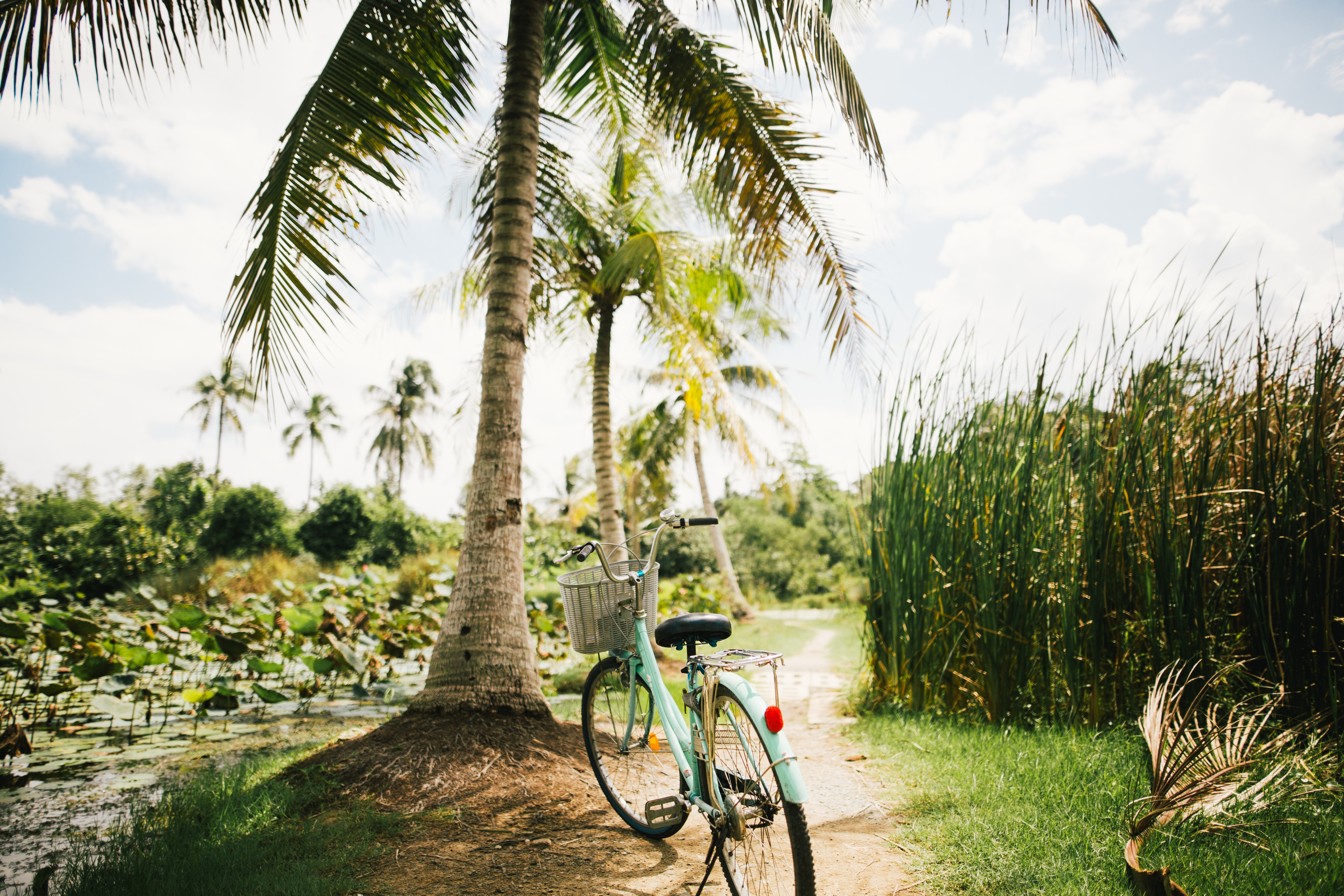 130027 free wallpaper 320x480 for phone, download images Tropics, Palms, Miscellanea, Miscellaneous, Sunlight, Bicycle 320x480 for mobile