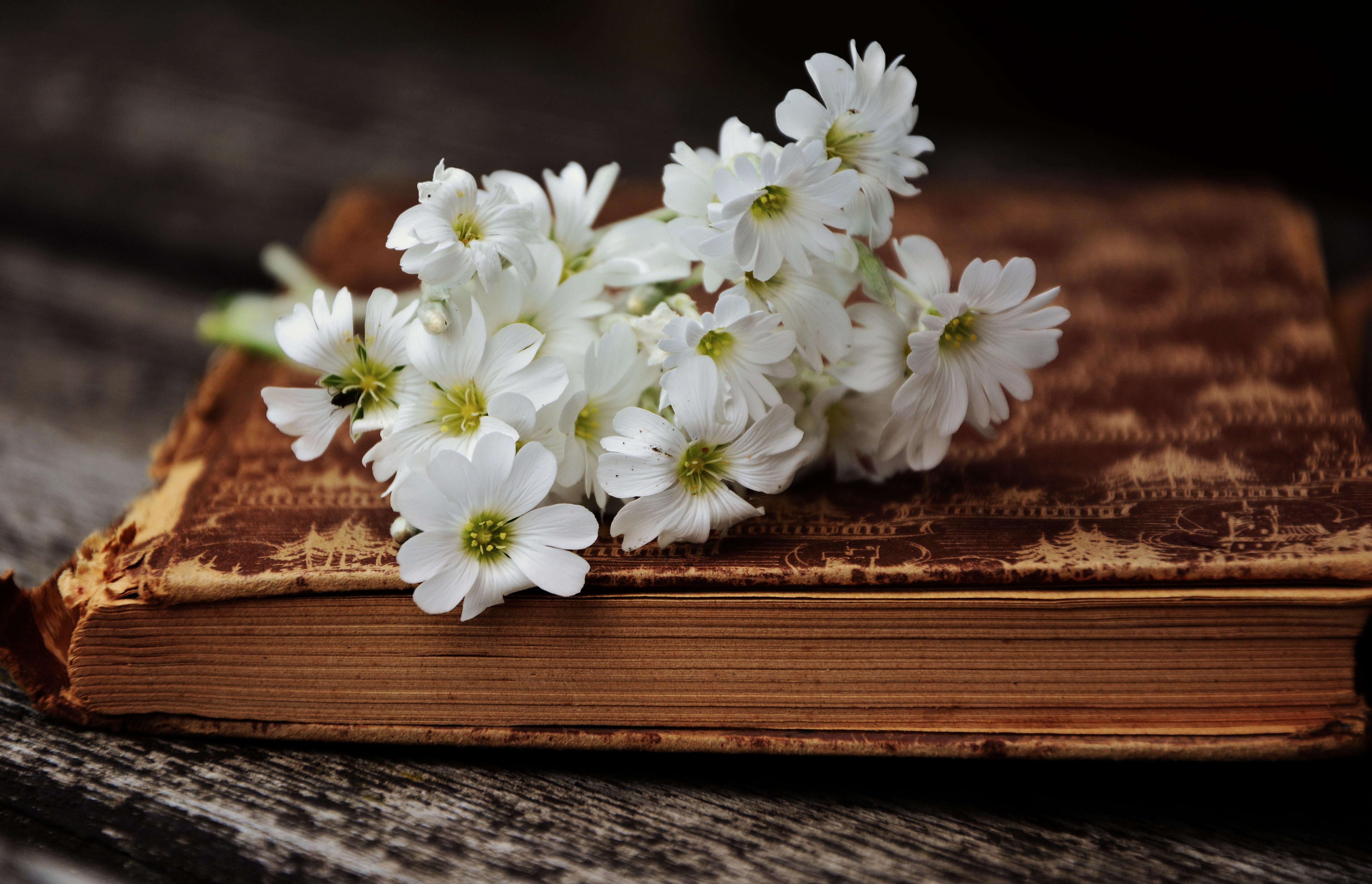 72141 скачать обои Цветы, Книга, Старинный - заставки и картинки бесплатно