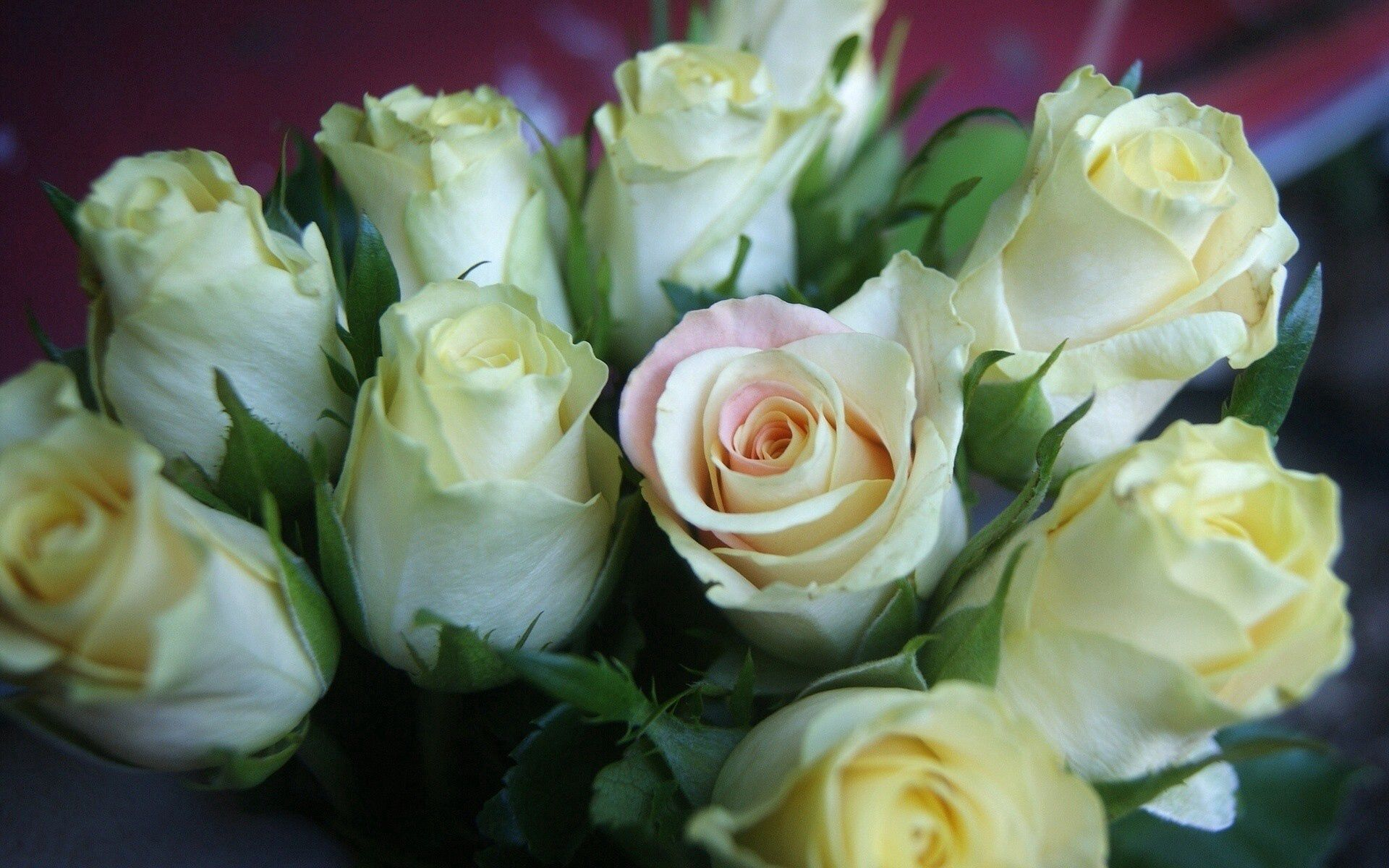 110597 скачать обои Розы, Цветы, Букет, Бутоны - заставки и картинки бесплатно