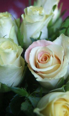 110597 скачать Белые обои на телефон бесплатно, Цветы, Букет, Бутоны, Розы Белые картинки и заставки на мобильный