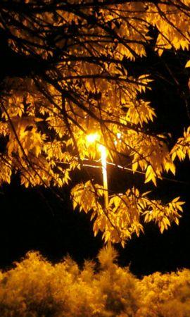 8377 скачать обои Пейзаж, Деревья, Осень, Листья - заставки и картинки бесплатно